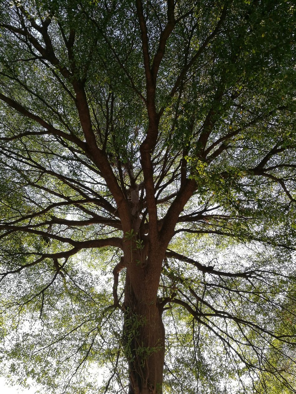Tree Tree Nature Low Angle View No People Growth Outdoors Branch Light And Shadow