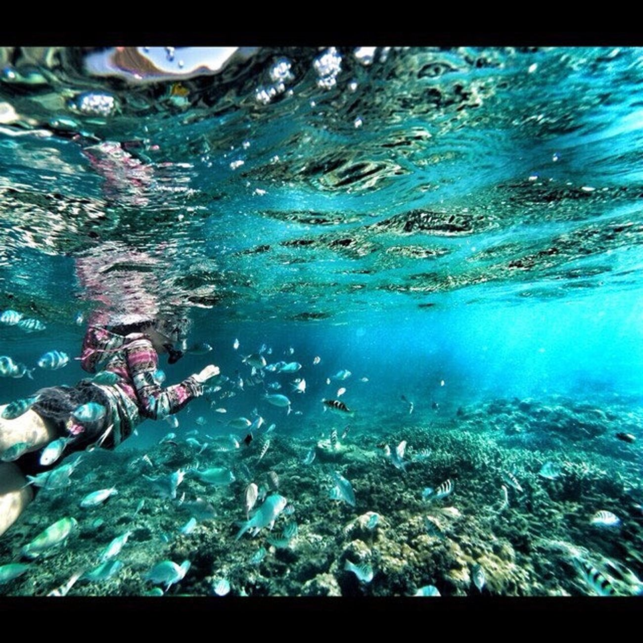 Gopro F4F HDR Followback Tokashiki 渡嘉敷島 沖縄 Japan Sea Snorkeling