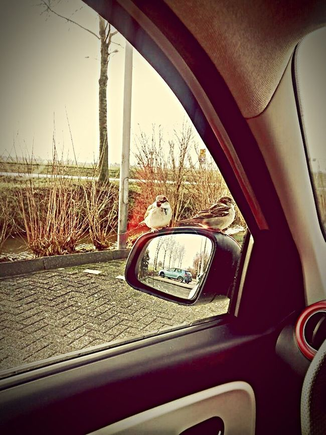 MeinAutomoment Sparrow TWINGO Birds Bird Photography Bird Spatz Spatzen
