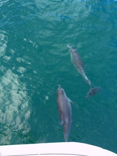 Taking Photos Travel Traveling Sydney Sea Boat Watching Wild Dolphins Nature IPhoneography