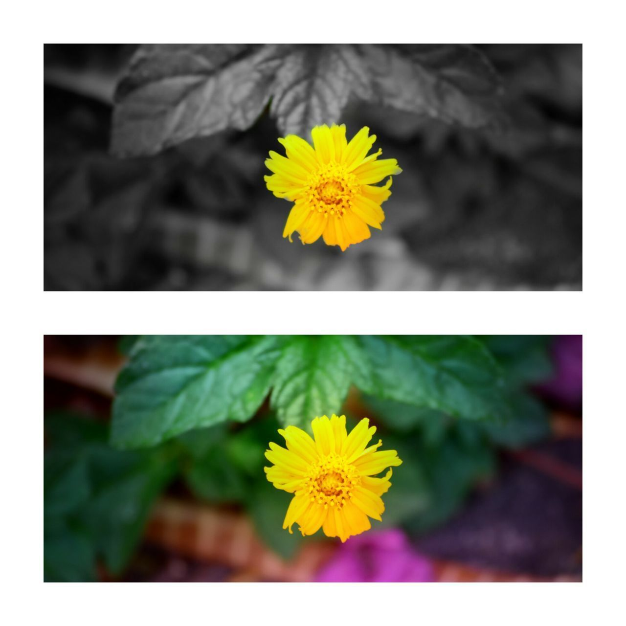 Flower Street India_clicks Yellow Flower Close-up Likeforfollow Followforfollow Like4like Follow4follow Likesforlikes Like4likes Outdoors Follower Looking At Camera