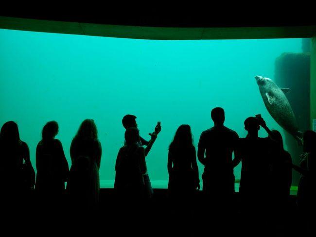 Green Shadow Shadows & Lights Aquarium Life Aquarium Photography Aquarium Contrast Silhouettes Silhoutte Photography Waterlife Sealife Green Nature Oceanographic Valencia Oceanographic