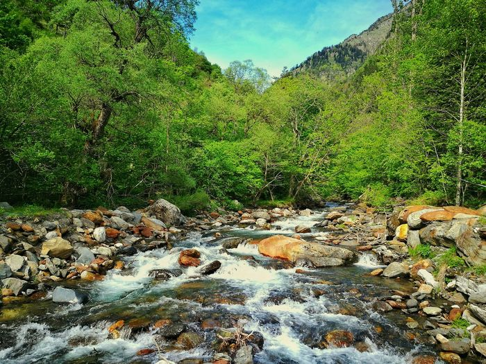 Nature Growth Outdoors Green Color Plant Tree Sky Beauty In Nature Water River Landscape Lost In The Landscape