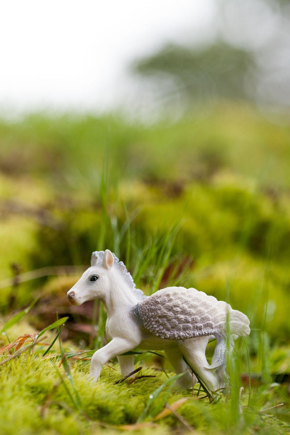 Beautiful stock photos of unicorn,  Close-Up,  Day,  Field,  Grass