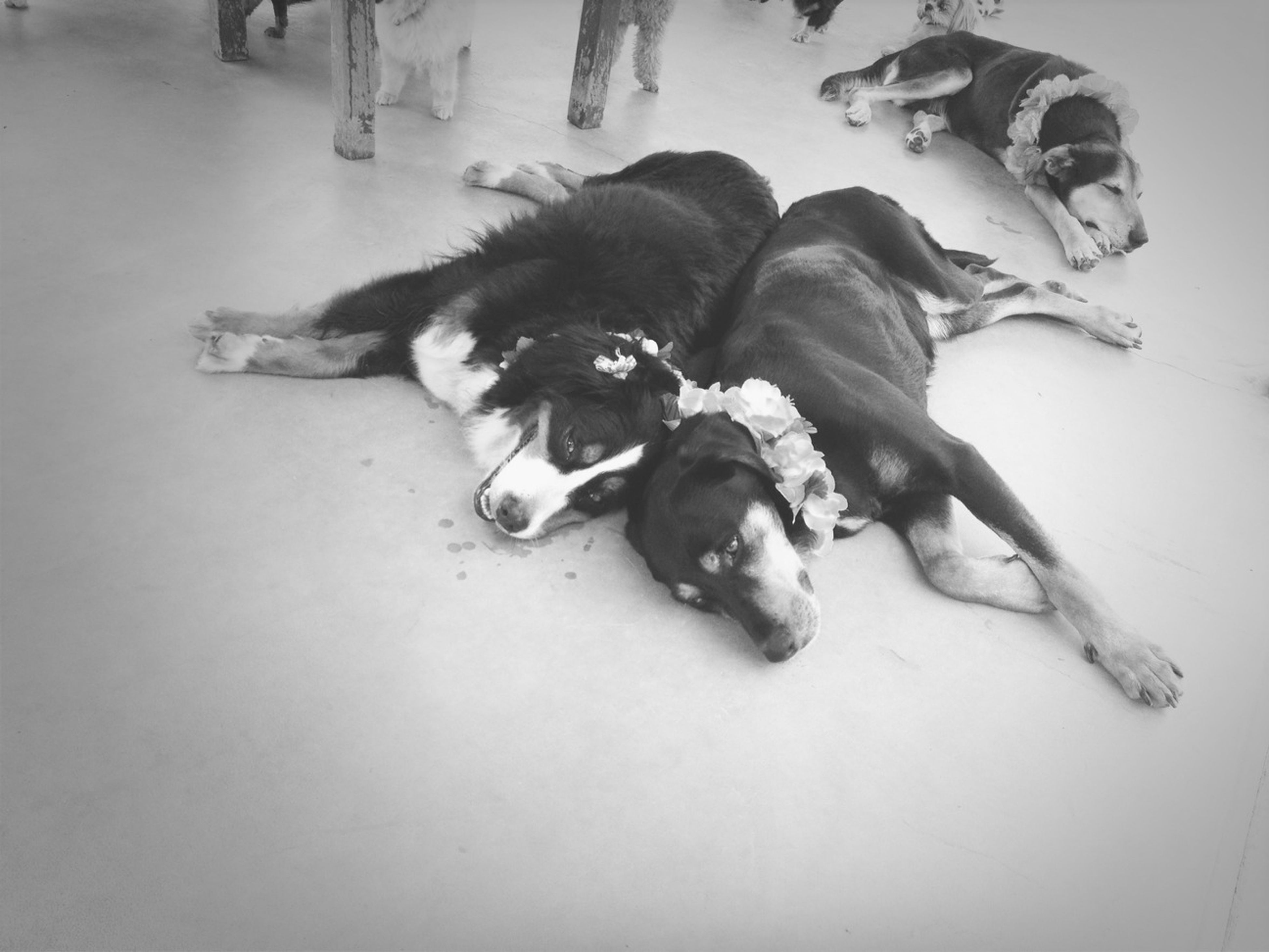animal themes, high angle view, pets, domestic animals, dog, mammal, one animal, togetherness, indoors, two animals, snow, cold temperature, winter, dead animal, young animal, directly above, wildlife, relaxation, day