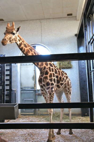 Animal Animal Art Animal Food Eating Food Giraffe Giraffe ♡ No People People Best Friend Vegetarian Food Zoo Zoo Animals