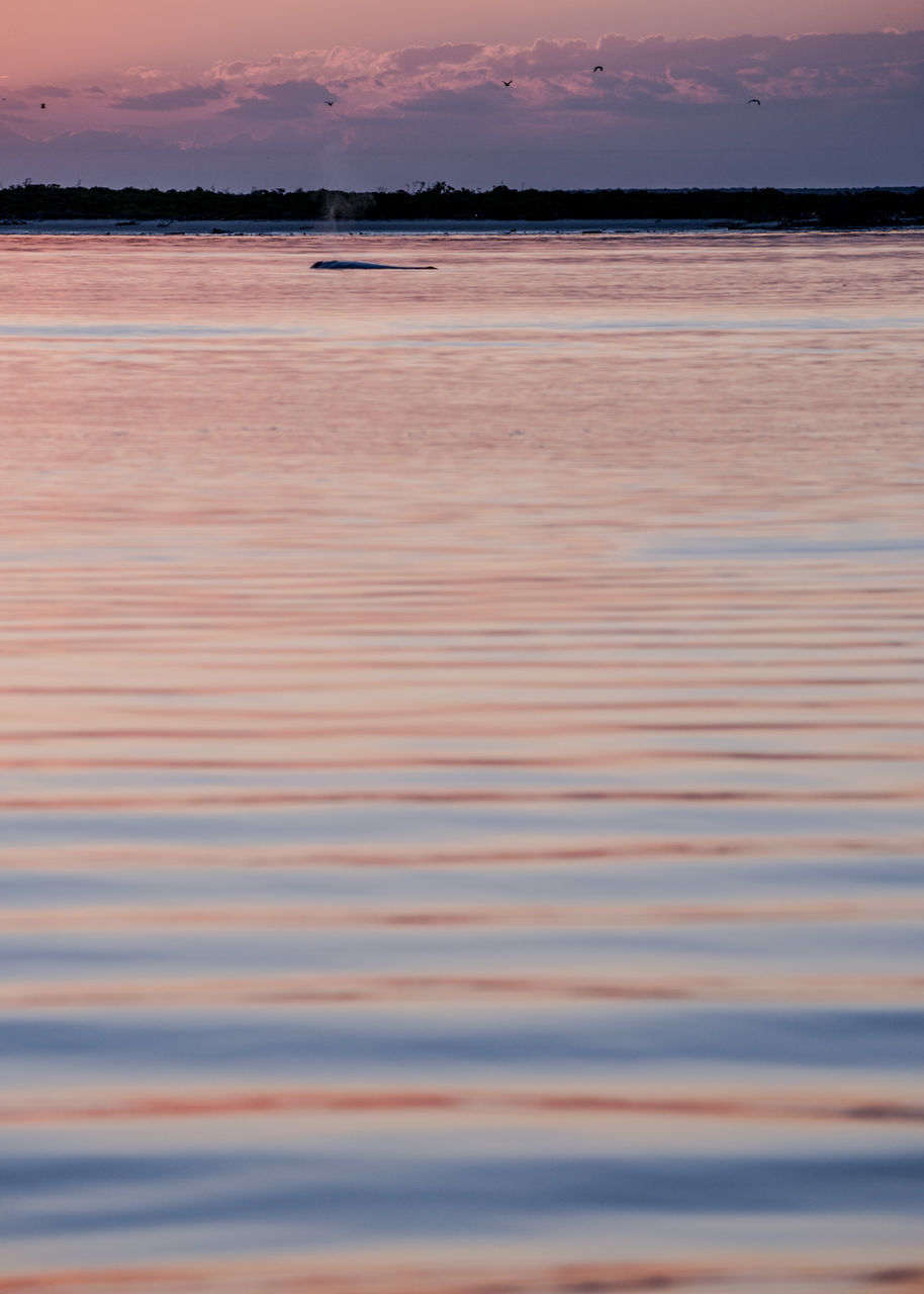 water, sunset, nature, reflection, beauty in nature, scenics, tranquil scene, outdoors, tranquility, beach, lake, waterfront, no people, sky, sand, salt flat, day, low tide, flamingo