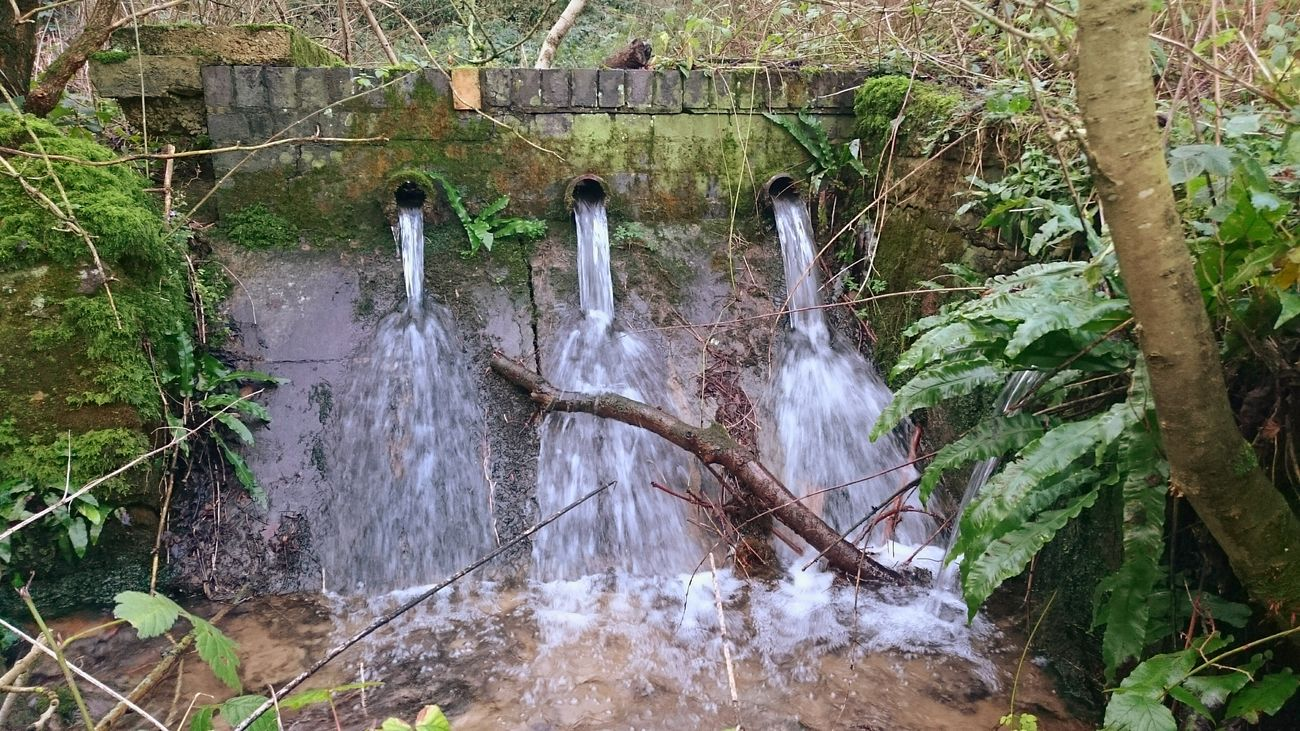 WoodLand Beautiful Nature Beauty In Nature Waterfall Water Waterscape Moss Moss-covered Green Moss Mossy Tree Tree Branches Bare Branches Winter Branches Streams Streams Of Water Brick Wall Forgotten Walls Woodland Streams Woodlandswaterfront Winter Woodland Watching Waterfalls Showcase:January