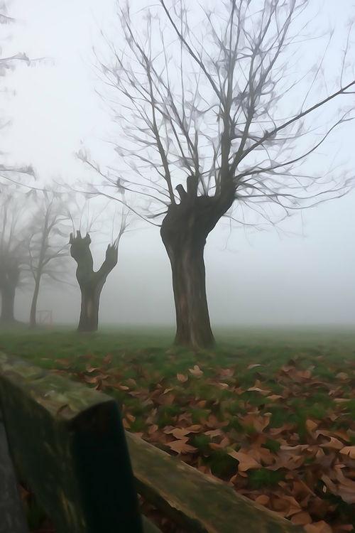 Picture Foggy Day Foggy Morning Cittadella Panchina Panchinavuota Parco