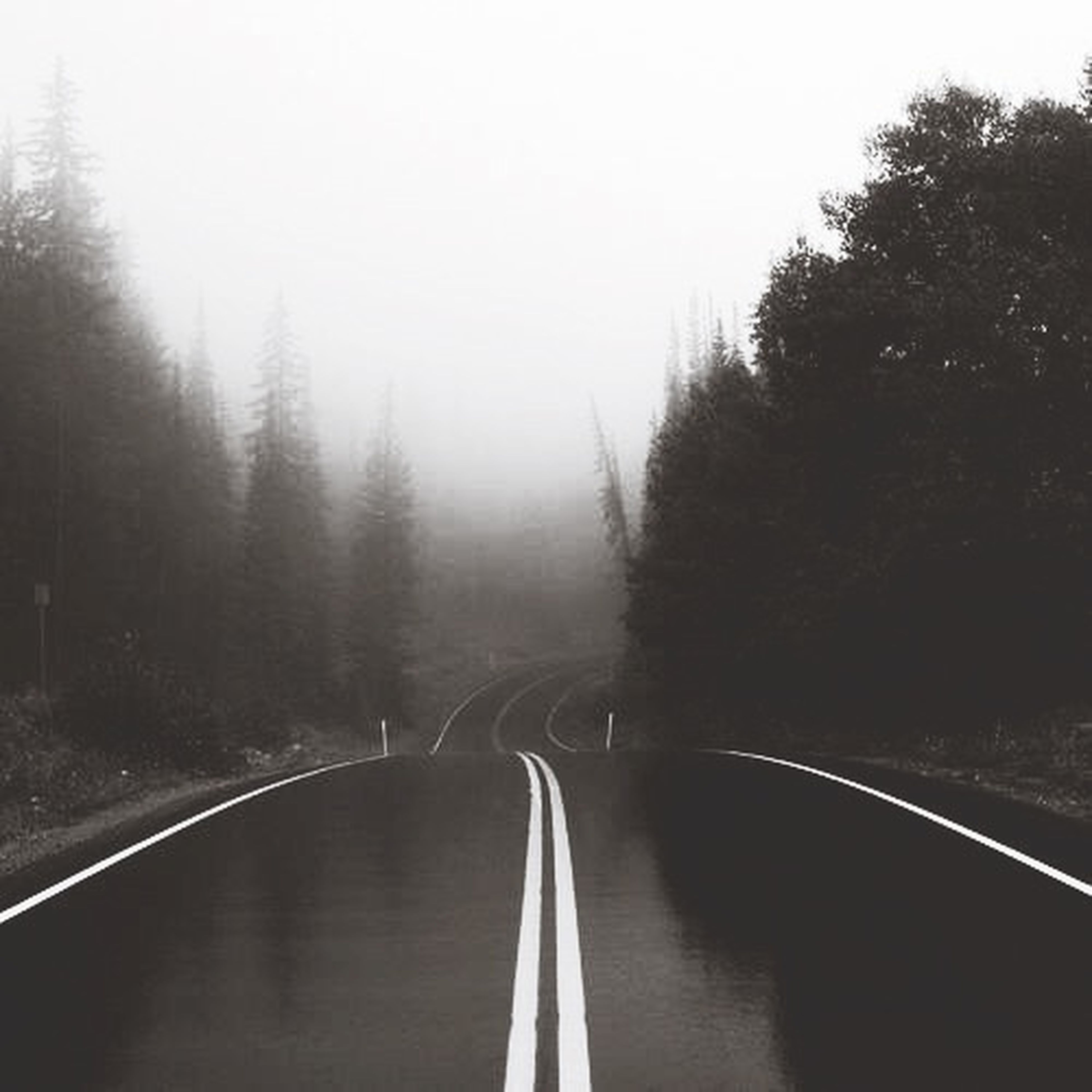 transportation, the way forward, tree, road, diminishing perspective, fog, mode of transport, vanishing point, windshield, weather, vehicle interior, road marking, tranquility, sky, travel, tranquil scene, glass - material, transparent, foggy