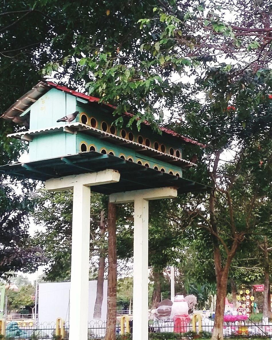 VanMieupark Caolanh City Vietnam Relaxing Greenday