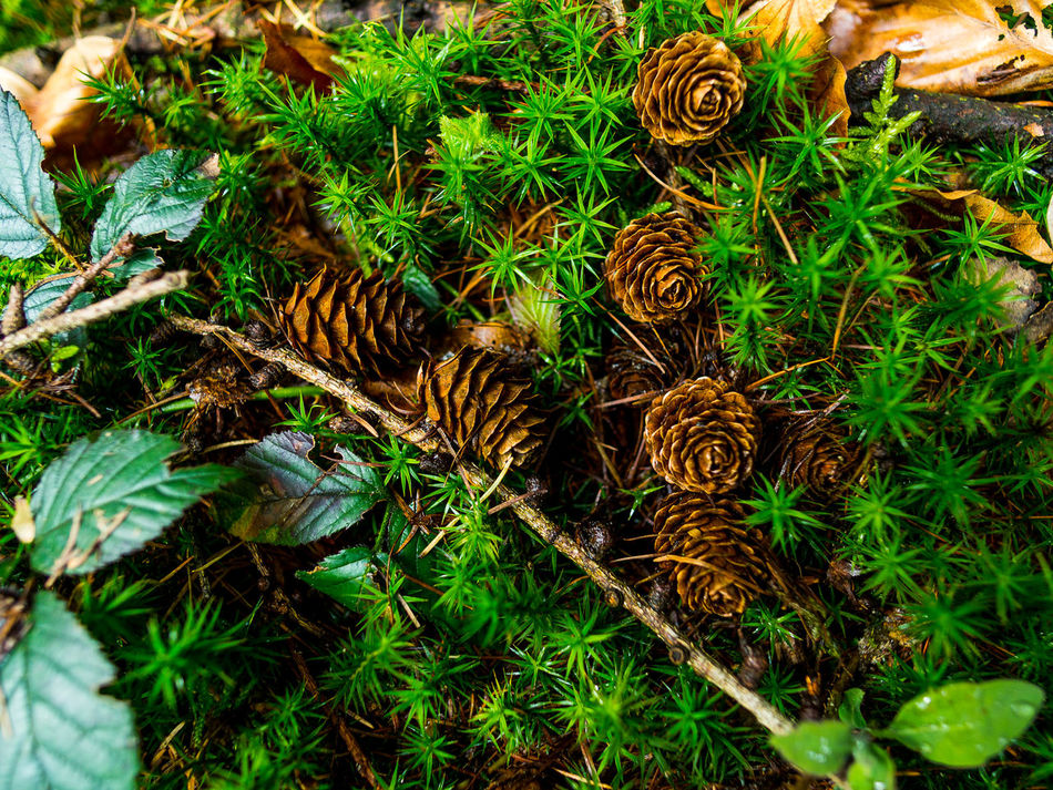 Animal Themes Beauty In Nature Close-up Day Field Grass Green Color Growth High Angle View Leaf Nature No People Outdoors Plant EyeEm Nature Lover EyeEm Best Shots Landscape Life In Colors Forest Photography Forest Trees Amazing Saturday Focus On Foreground Freshness Flora