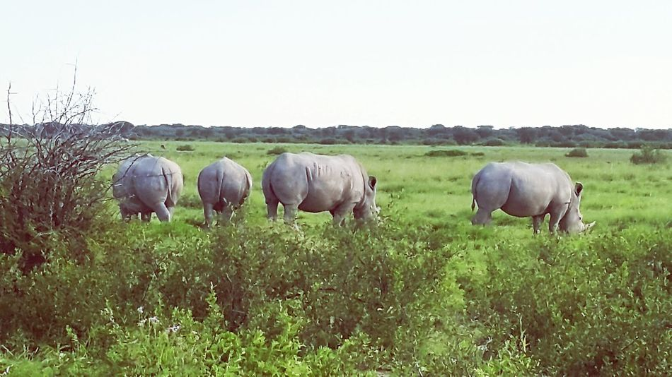 Khama Rhino Sanctuary Enjoying Life