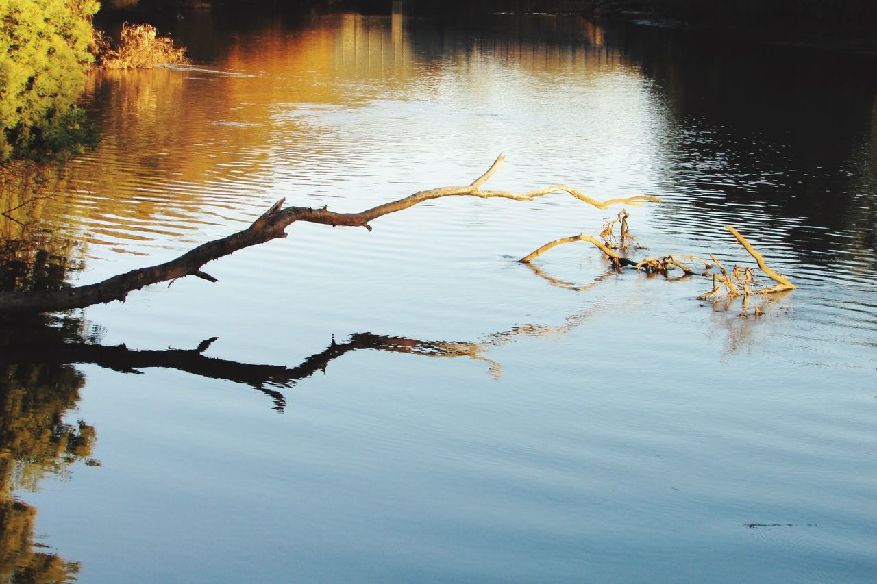 River Water Reflections Autumn Colors Trees Murrayriver Fallen Tree