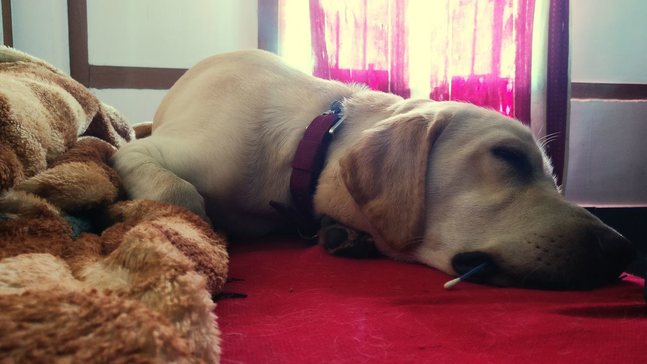 My one and only, Louie. Lying Down Bae❤️ Whiling Away The Sunday Afternoon Rainy Days☔ Phone Camera His Highness