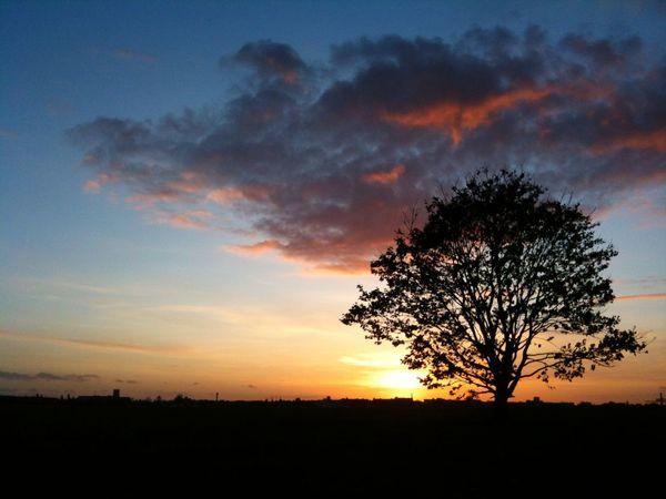 Sunset on tempelhofer Feld Tempelhofer Feld Sunset Silhouette Tree Orange Color Tranquil Scene Sky Beauty In Nature