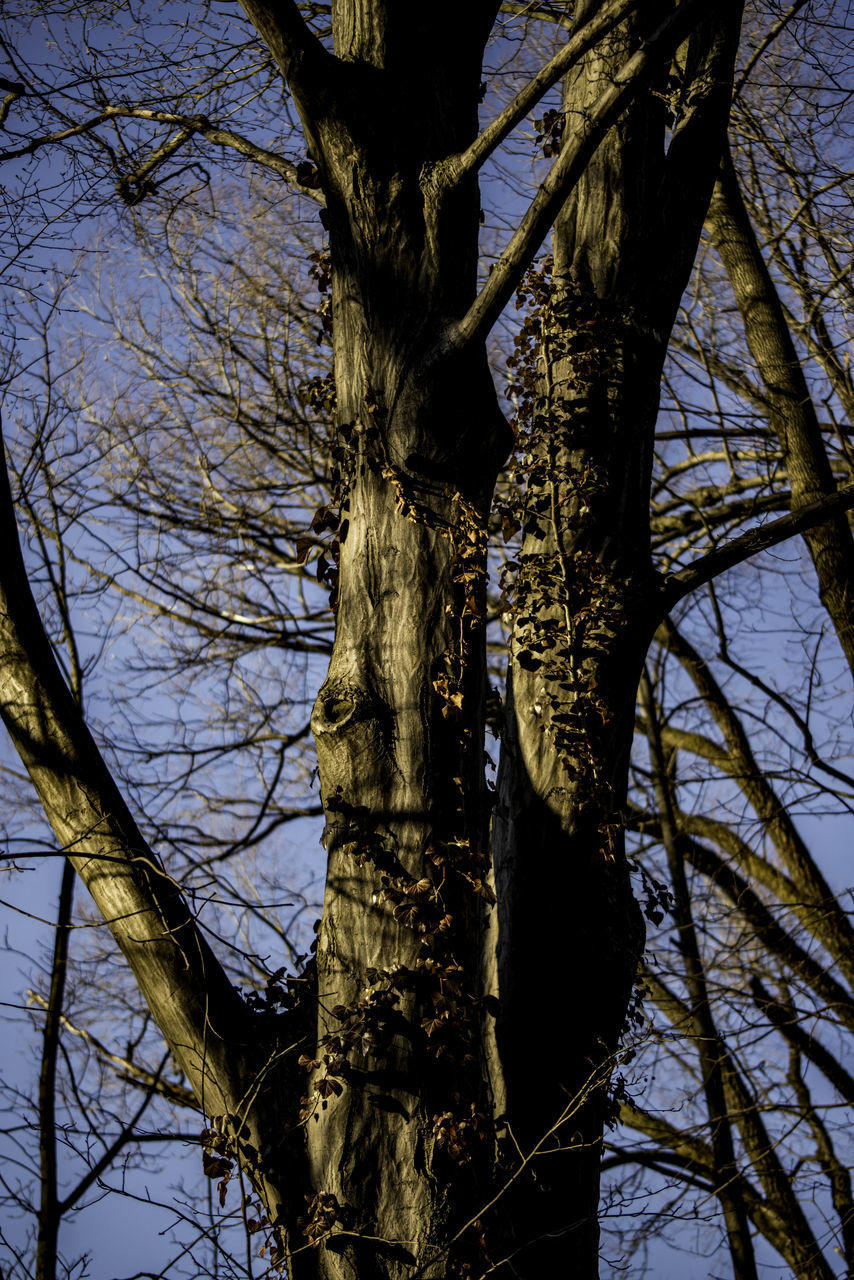 tree, tree trunk, branch, bare tree, low angle view, nature, no people, day, sky, growth, outdoors, tranquility, beauty in nature, close-up, dead tree