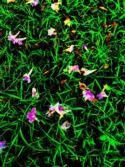 Nature Done That. Day No People Flower Nature Growth Purple Beauty In Nature Outdoors Green Color Petal Plant Fragility Grass Blooming Freshness Close-up Flower Head