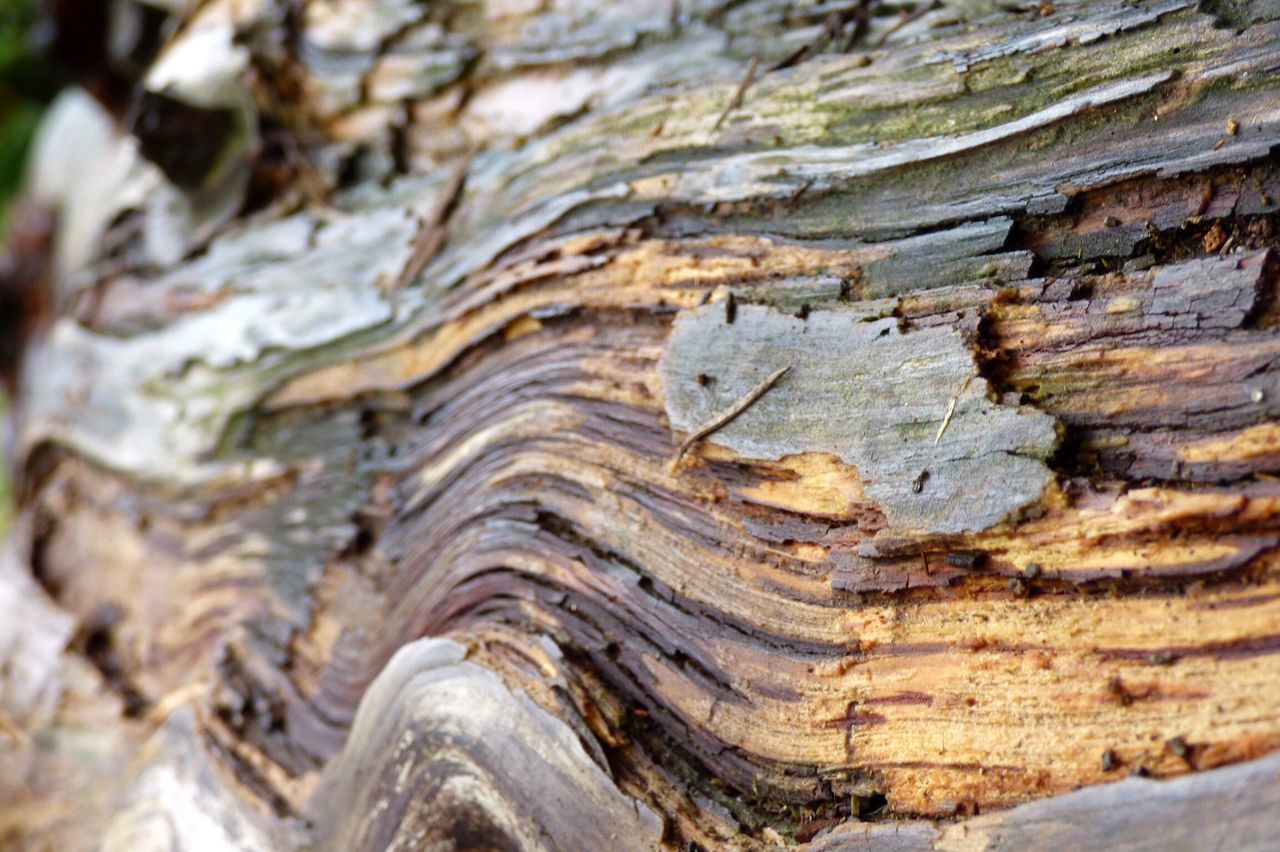 rough, textured, nature, tree trunk, close-up, day, tree, pattern, no people, backgrounds, outdoors, full frame, beauty in nature