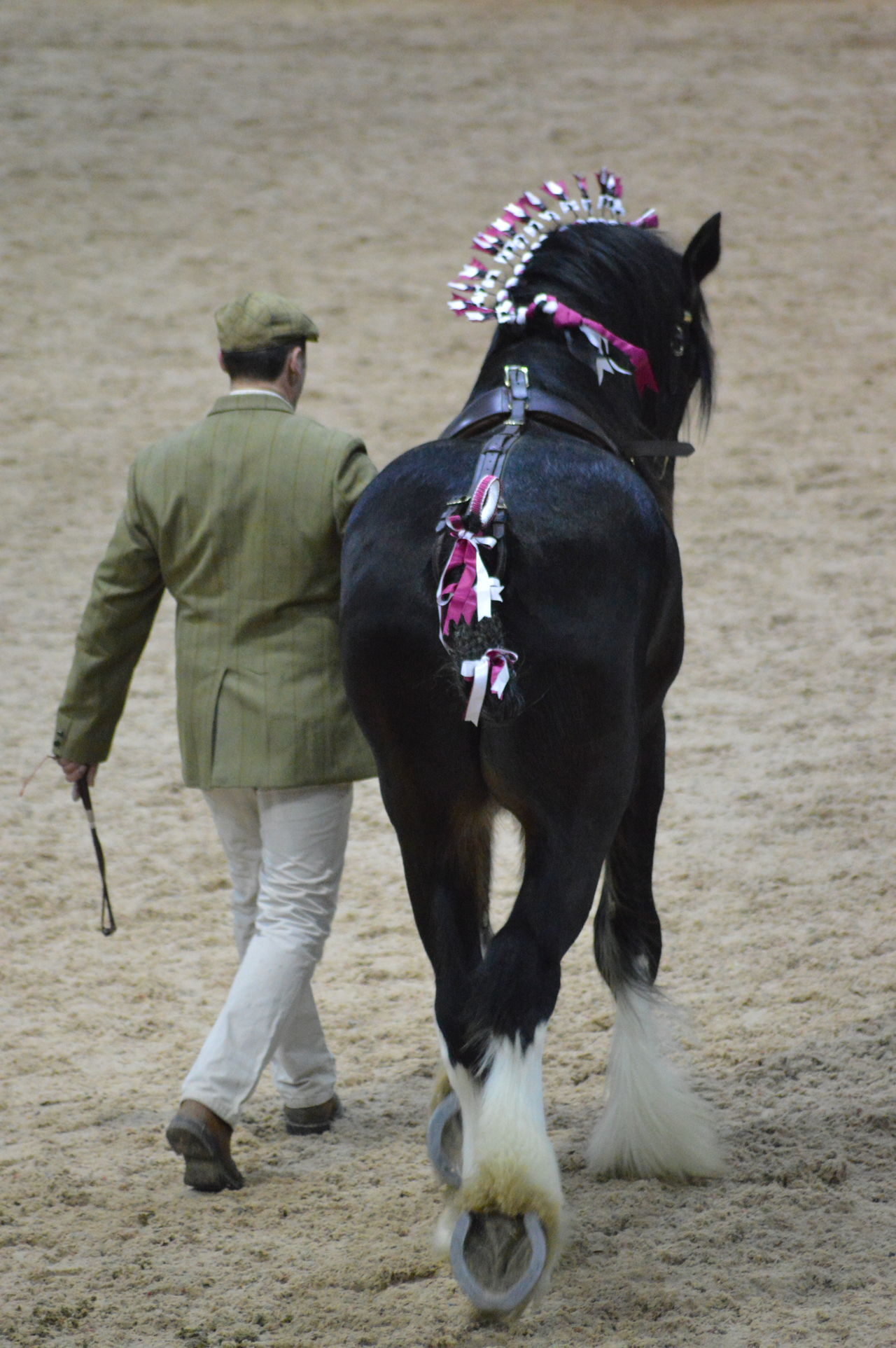 Full Length Walking Rear View Horse Photography  Heavy Horse Shire Horse Stallion National Shire Horse Show Working Animal Equine Photography Equine Horse Power Standing Tall No Edit, No Filter, Just Photography