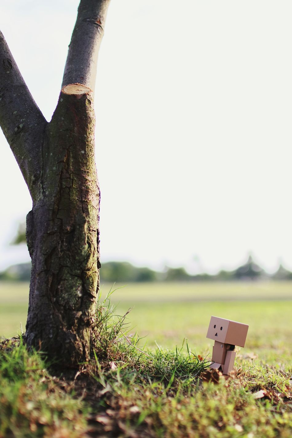 疲れた~。 Danbo EyeEm Gallery Cheese! Sky And Trees Outdoors Park Taking Photos Tree