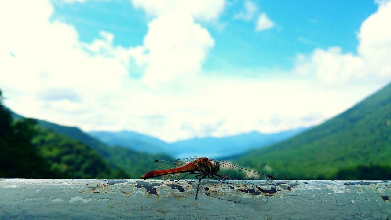 Japan Chuzenji-Lake Nikko a dragonfly in Summmer.