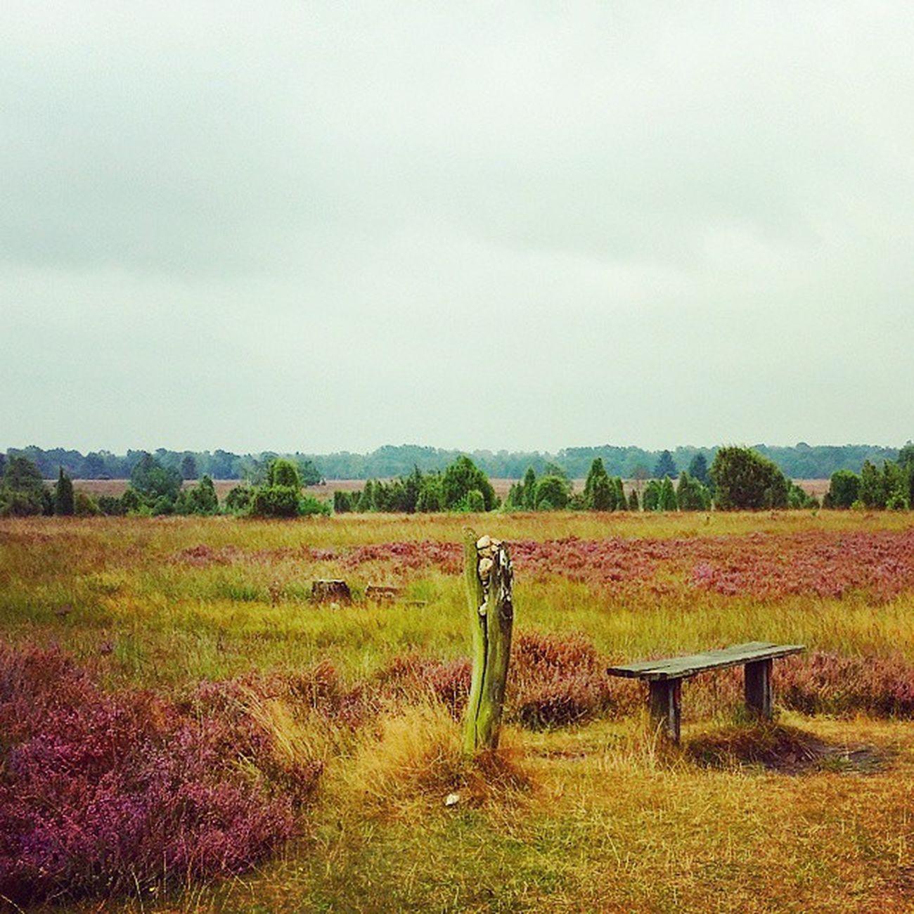 Heide Landschaft - schön war es gestern. Jetzt Altes Land und Elbstrand und zurück nach Hause Radtour Biketouring Biketour Altesland Lüneburgerheide Natur Naturschutzgebiet Draußen Picoftheday