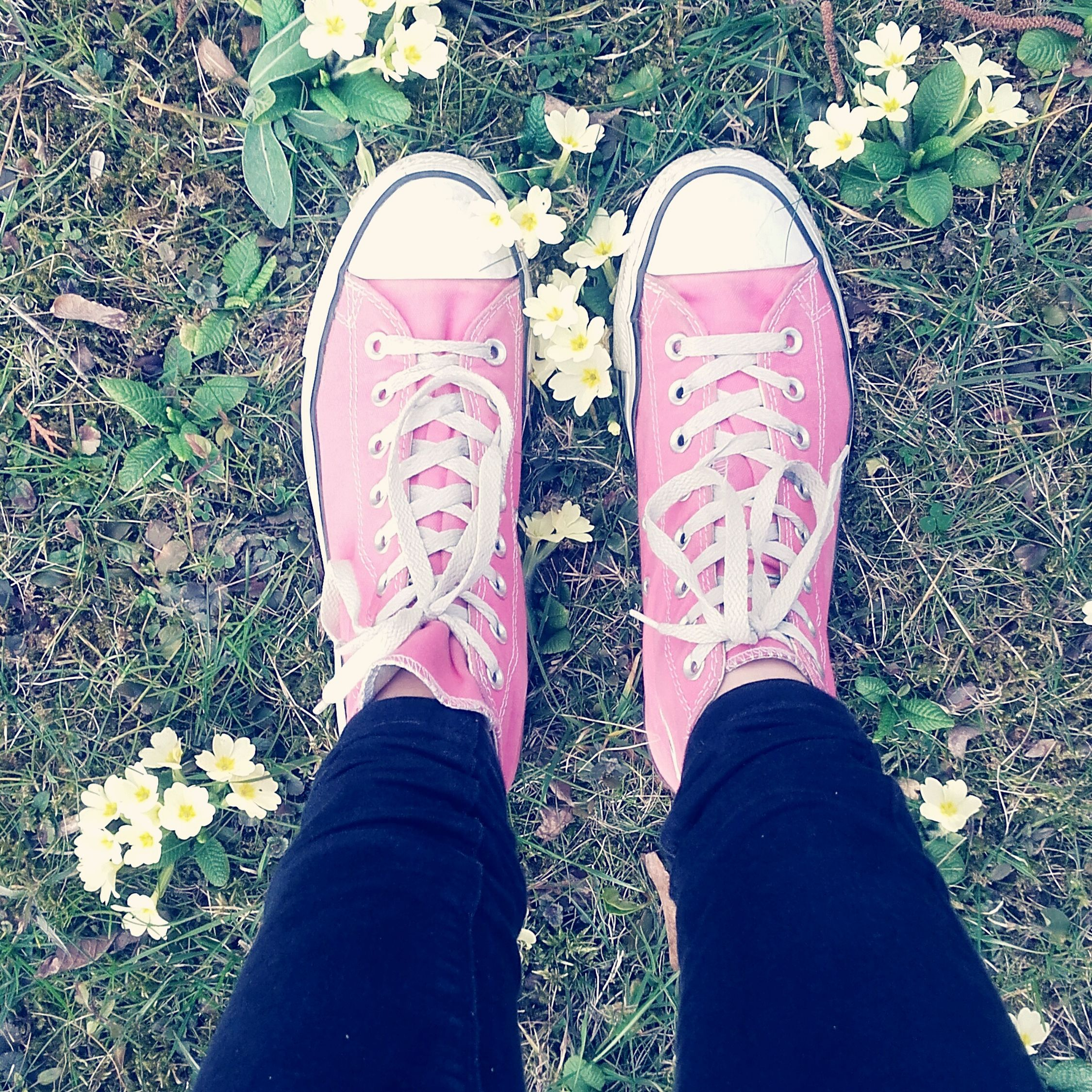 Spring Urban Spring Fever Flowers Converse All Star Converse Pink Color Pinkclouds Black Me Myself & I .