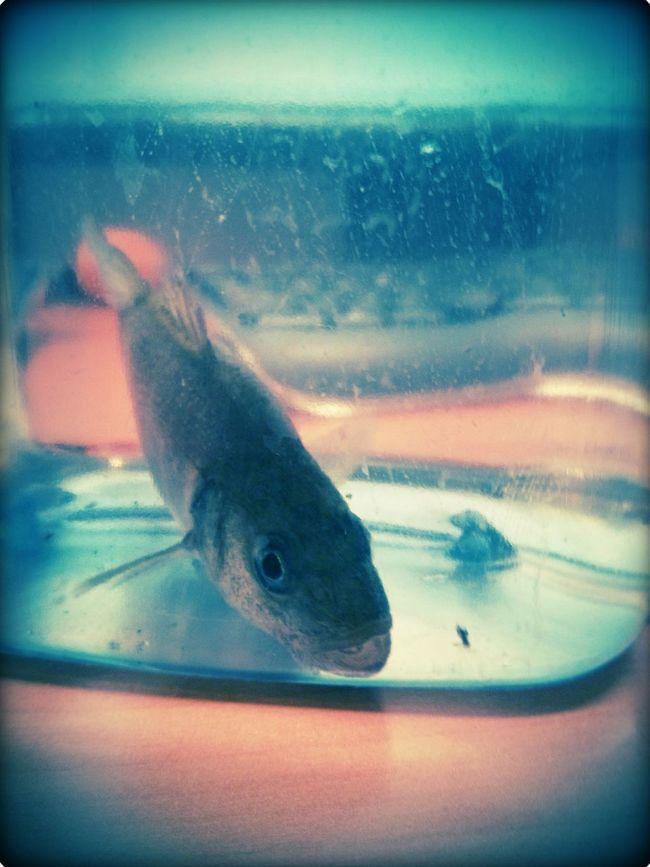 fish on my desk