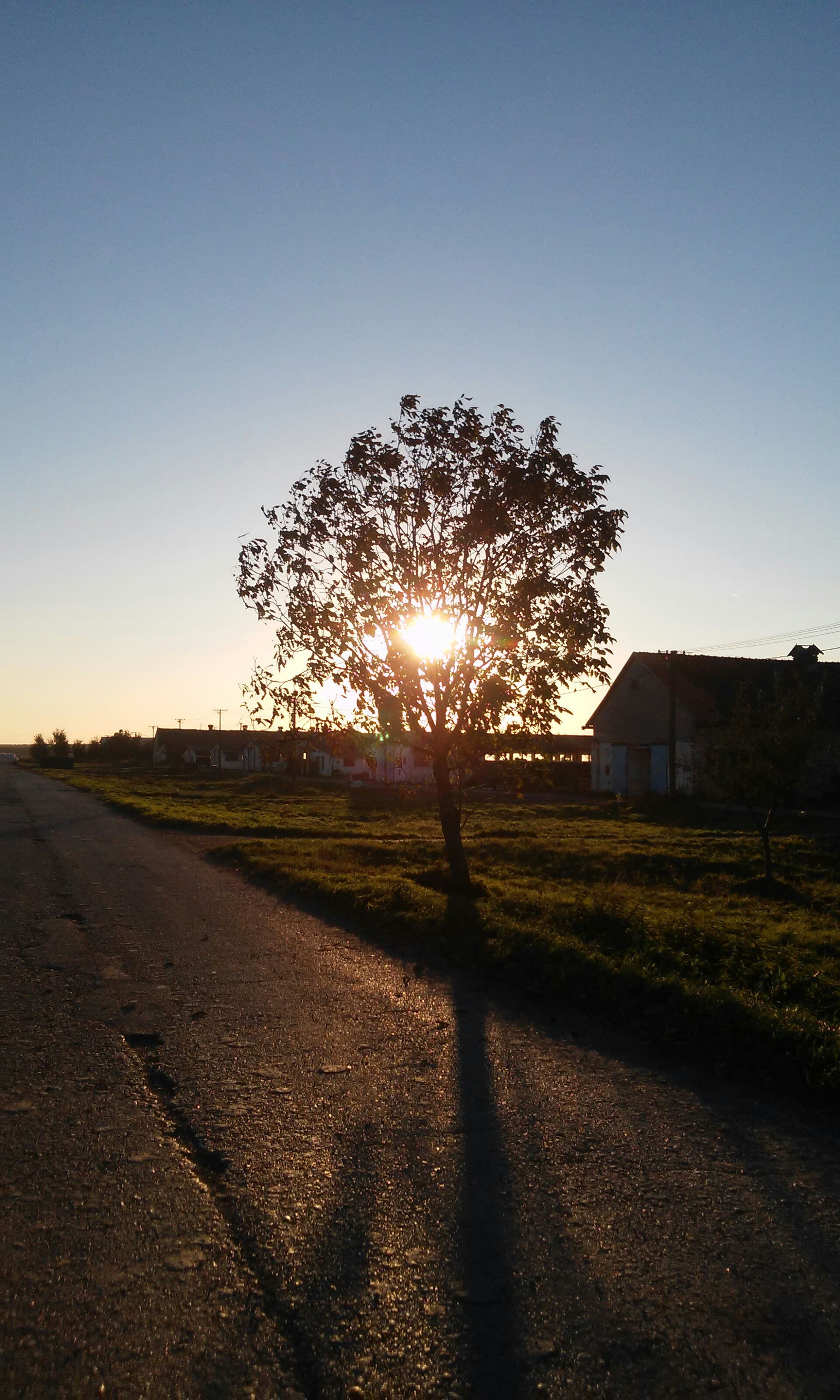 sun, silhouette, sunlight, clear sky, sunset, lens flare, sunbeam, tree, sky, field, road, landscape, street, tranquility, nature, tranquil scene, shadow, building exterior, outdoors, bare tree