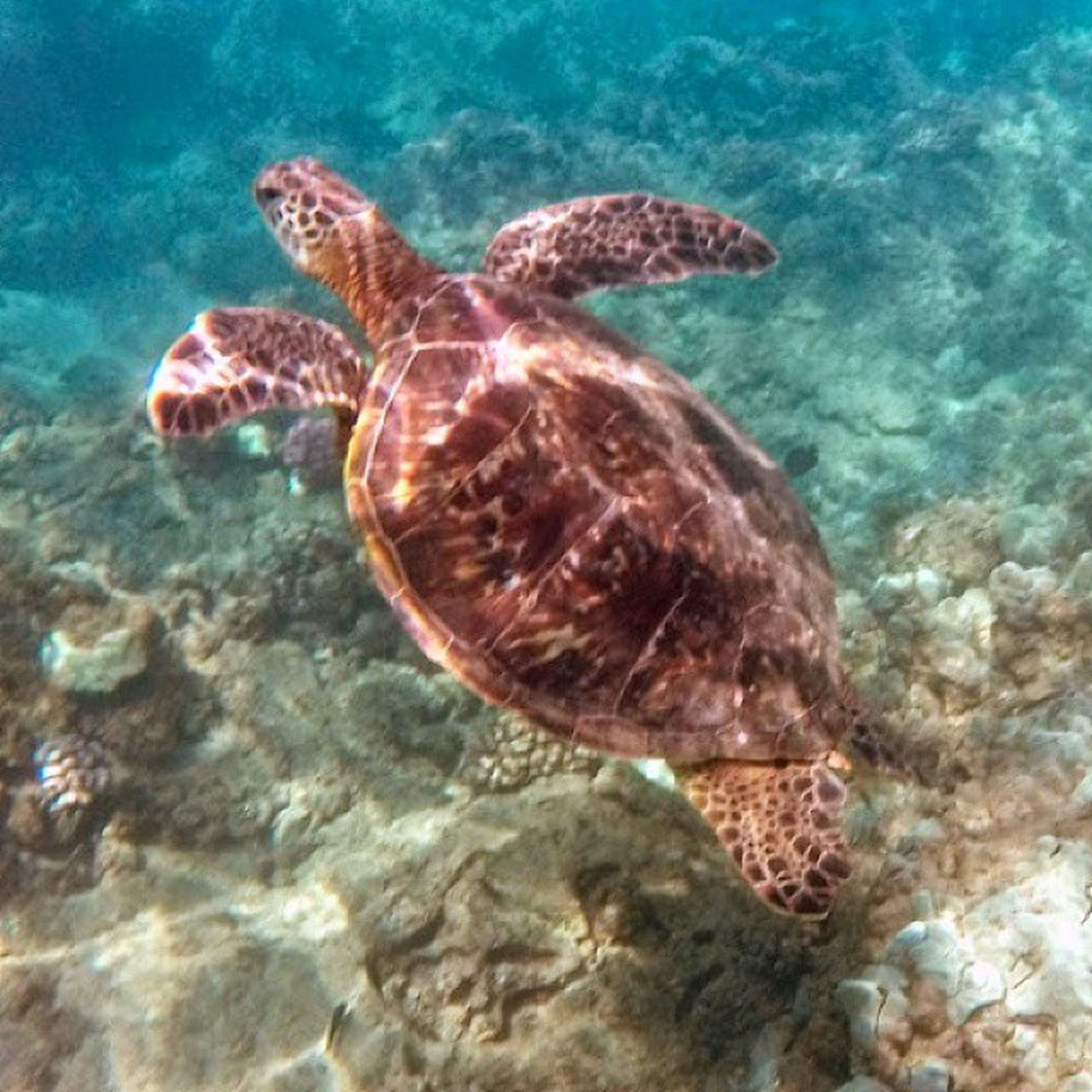 animal themes, animals in the wild, wildlife, water, one animal, swimming, sea life, underwater, sea, reptile, fish, nature, undersea, turtle, rock - object, zoology, close-up, two animals, beauty in nature, animals in captivity
