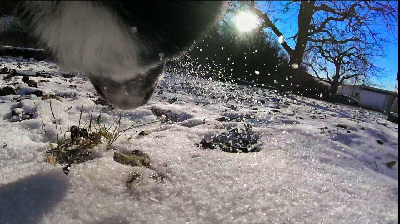 Snapseed Winter Wonderland Winter Sunshine Cold Goprophotography Goprooftheday Goprohero4 Dog Dogs Dogs Of EyeEm Dogslife Snow Gopro Session Gopro