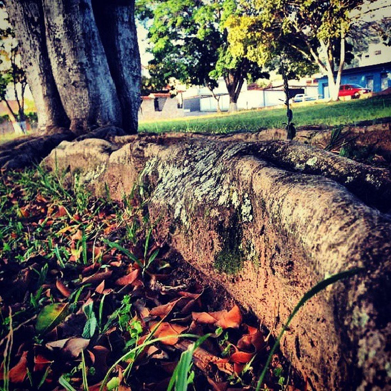 Dotspin Betosalvestrini Art Original Natural Nature Flowers Plants Peace Quickshoot Venezuela Sanjuandecolon