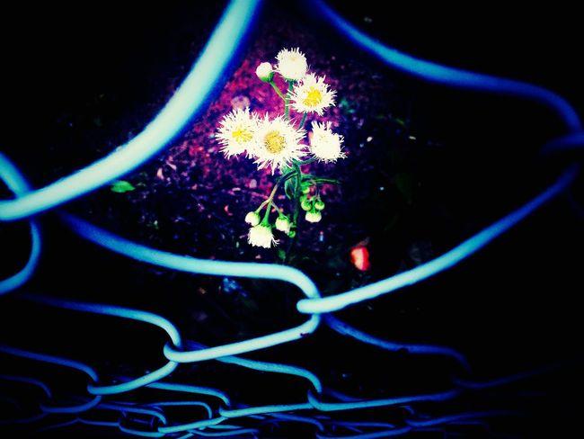 Hello World Flower Oneflower Weed Hope Enjoying Life Hungry Split Japan Japanese  Iphonegallery EyeEm Gallery Peace https://youtu.be/6YhDRNIeXGo Pic:by:siu