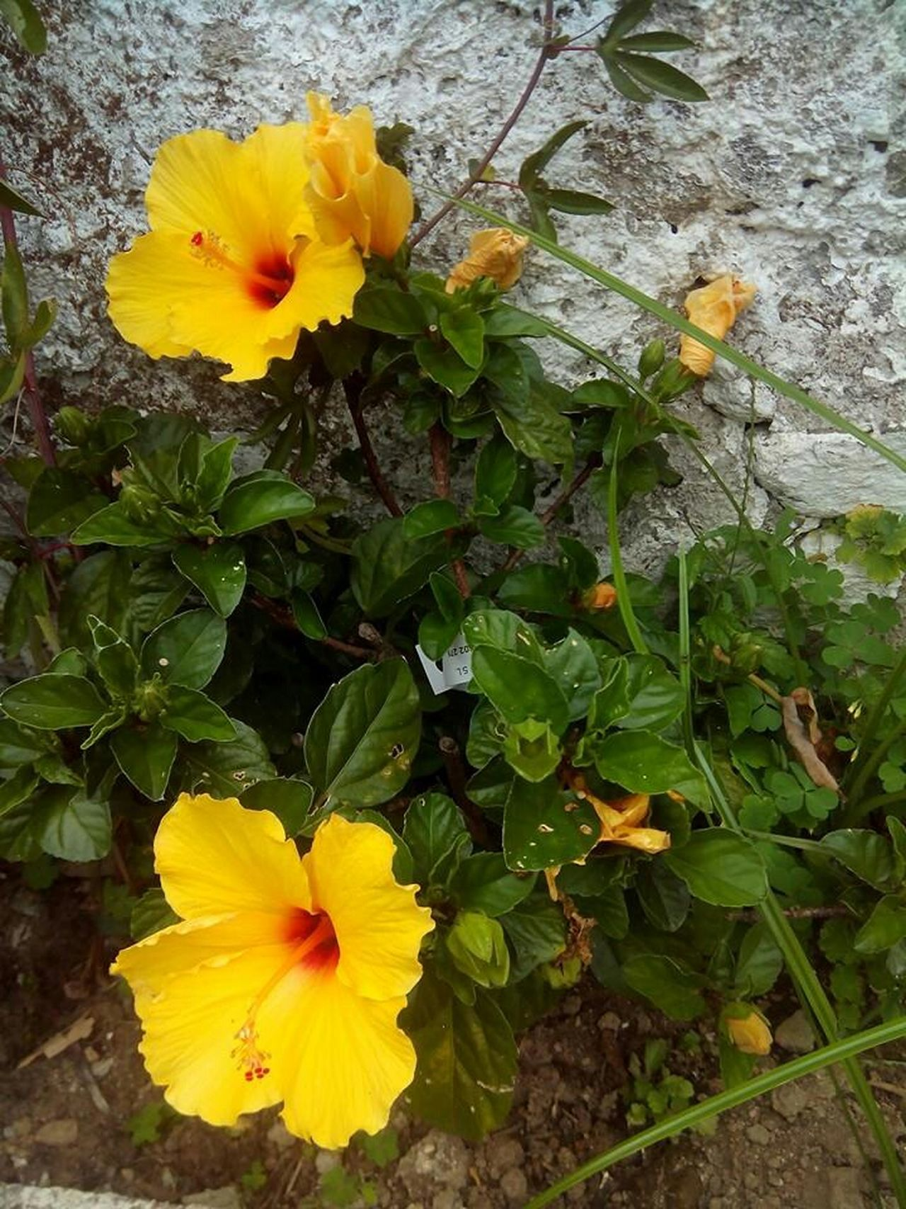 Flowers Flowers Galicia