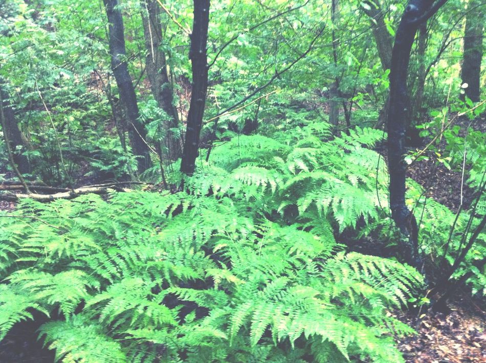 Allemaal ga echt NU naar het bos! Al die varens! Varens BOS Slechtweer First Eyeem Photo