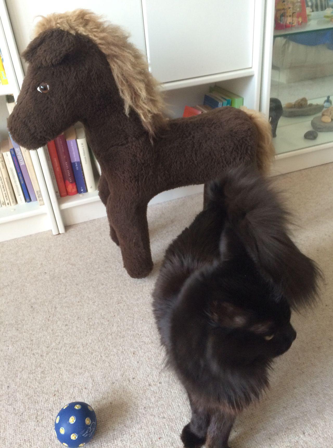 Cat Black Cat curiosity Pets Close-up At Home