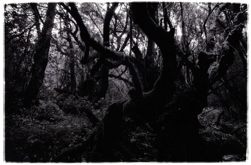 Forest Planet Earth Wildlife & Nature Wonderwood Blackandwhite Blackandwhite Photography Forest Rainforest Tweda