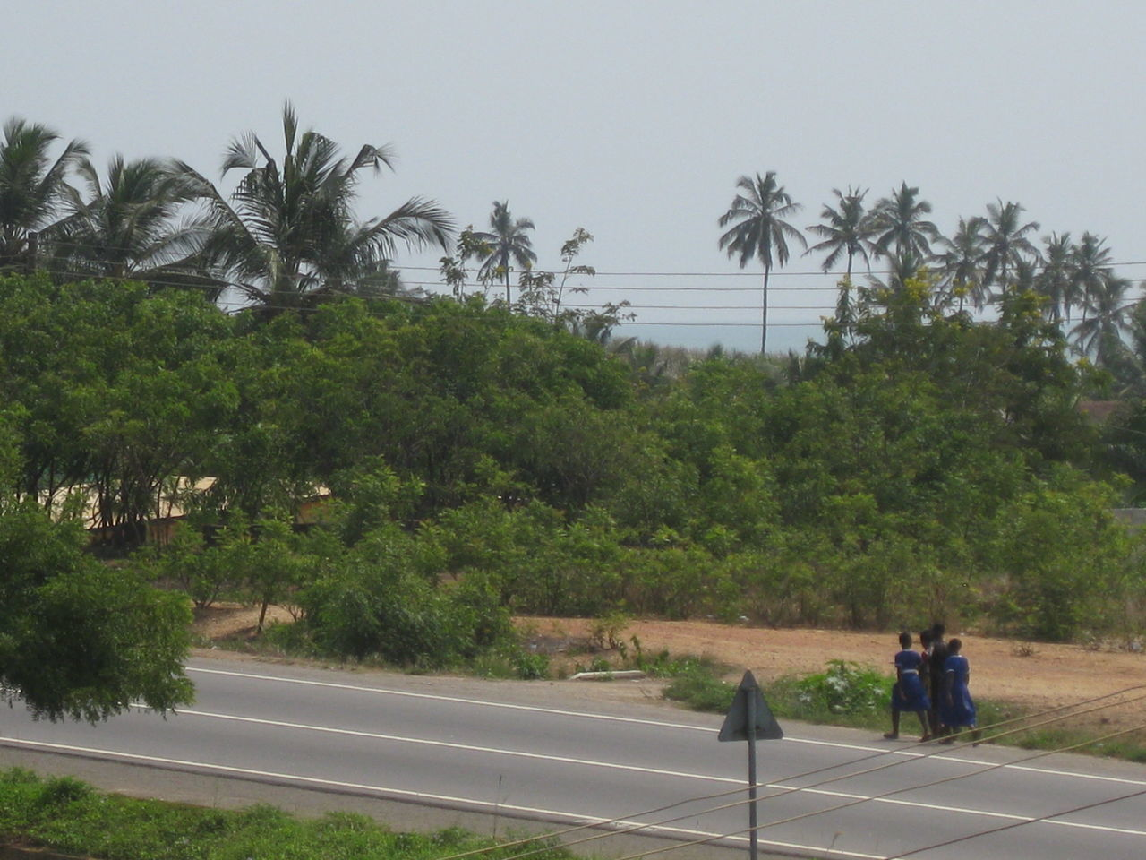 tree, palm tree, road, walking, growth, men, nature, real people, outdoors, day, sky, people