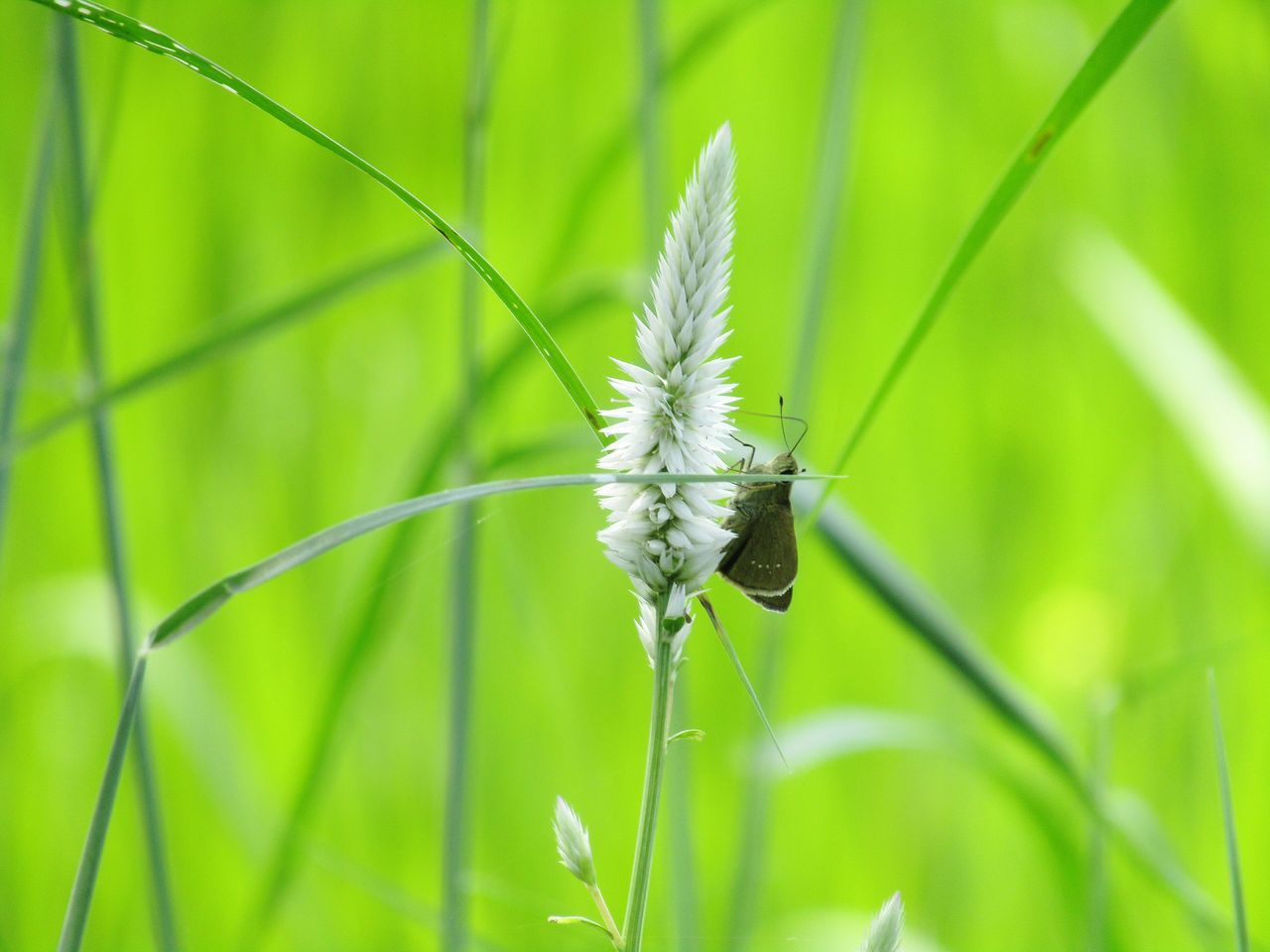 growth, green color, plant, nature, grass, insect, beauty in nature, one animal, day, no people, outdoors, close-up, animals in the wild, animal themes, fragility, flower, freshness