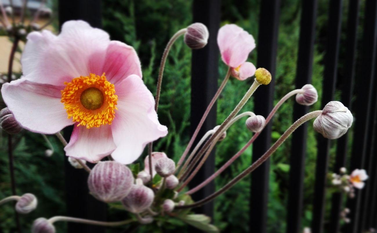 Flower Flowers Beautiful Iloveflowers Flowers 🌸🌸🌸 Flower Photography Flowerslovers Flowers & Plants Plants 🌱