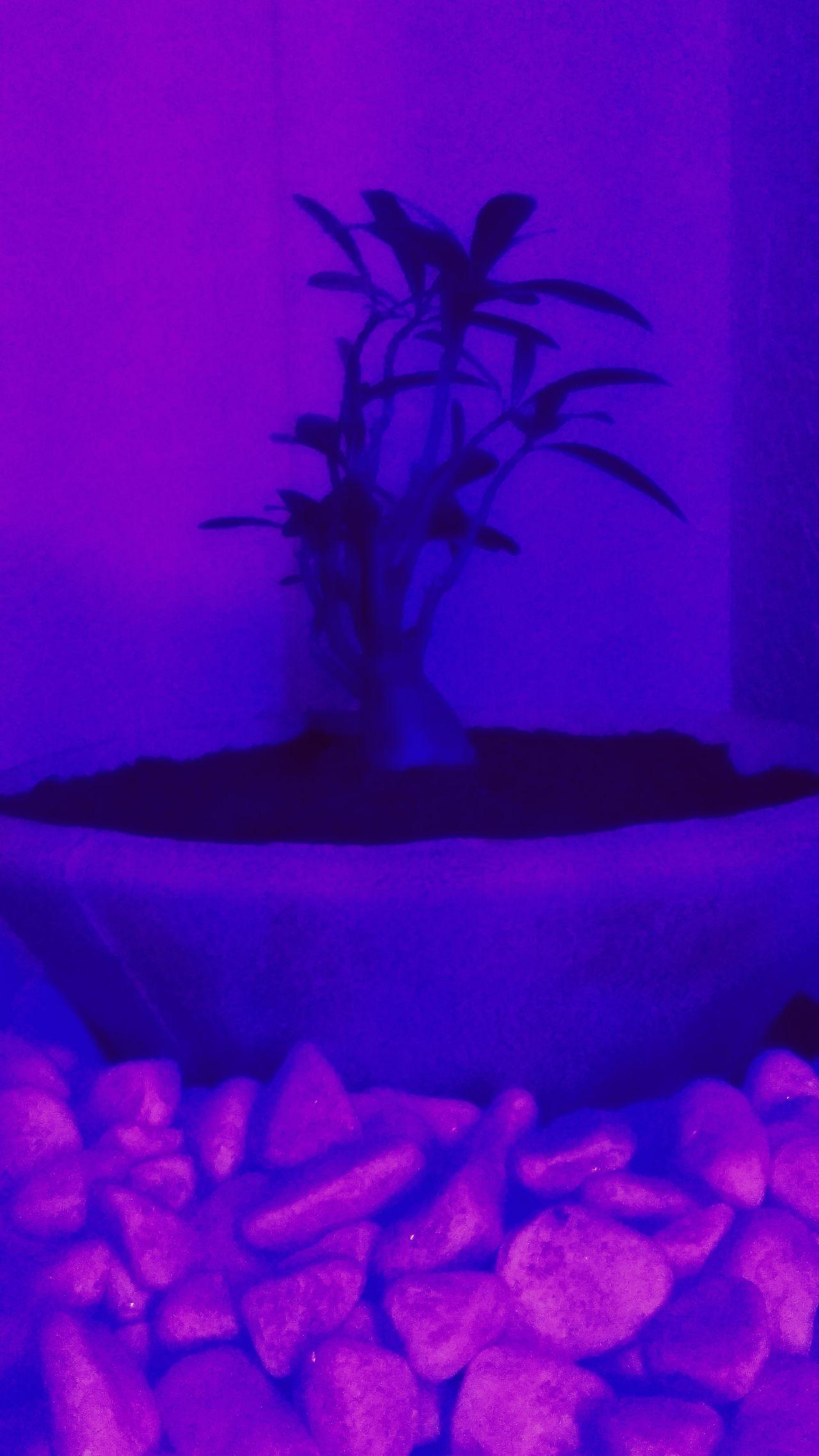 Flowers 🌸🌸🌸 Desert Flower Rock And Plant Deep Purple Zen Place Meditation Peace Mindfulness Moment Millennial Pink