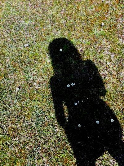 Daisies Daisy Flower Deceptively Simple Grass And Flowers Hello Spring Nature Connection Shadow Selfie Springtime