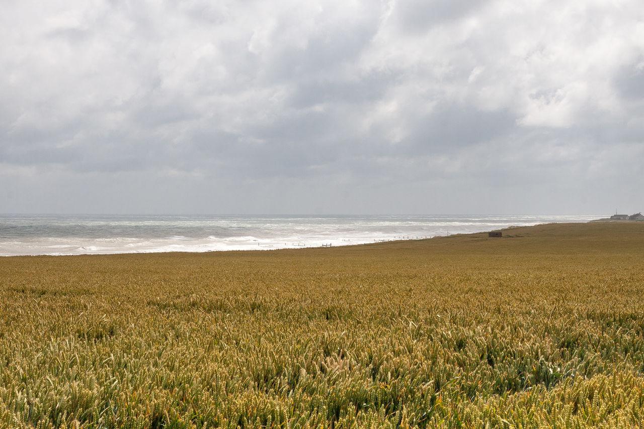 Norfolk Coast Beach Beauty In Nature Cloud - Sky Coastal Coastal Landscape Day Growth Horizon Over Water Horizontal Landscape Nature No People Norfolk Outdoors Scenics Sea Sky Tranquility Water Wheat Wheat Field