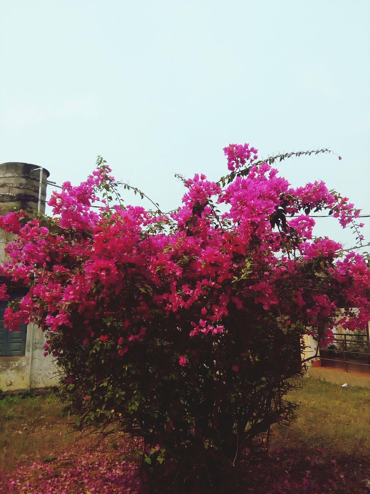 Pastel Power Big Flower Bucket Heart In Nature
