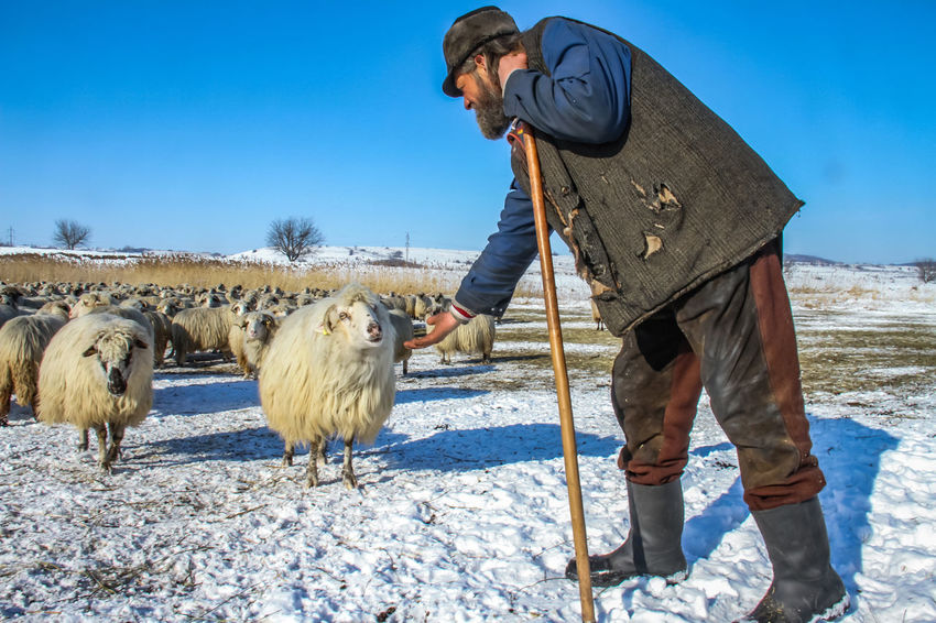 Shepherd Of The Sheep Adult Cold Temperature Day Domestic Animals Full Length Livestock Mammal Men Nature One Man Only One Person Outdoors People Real People Sky Snow Standing Sunlight Warm Clothing Winter