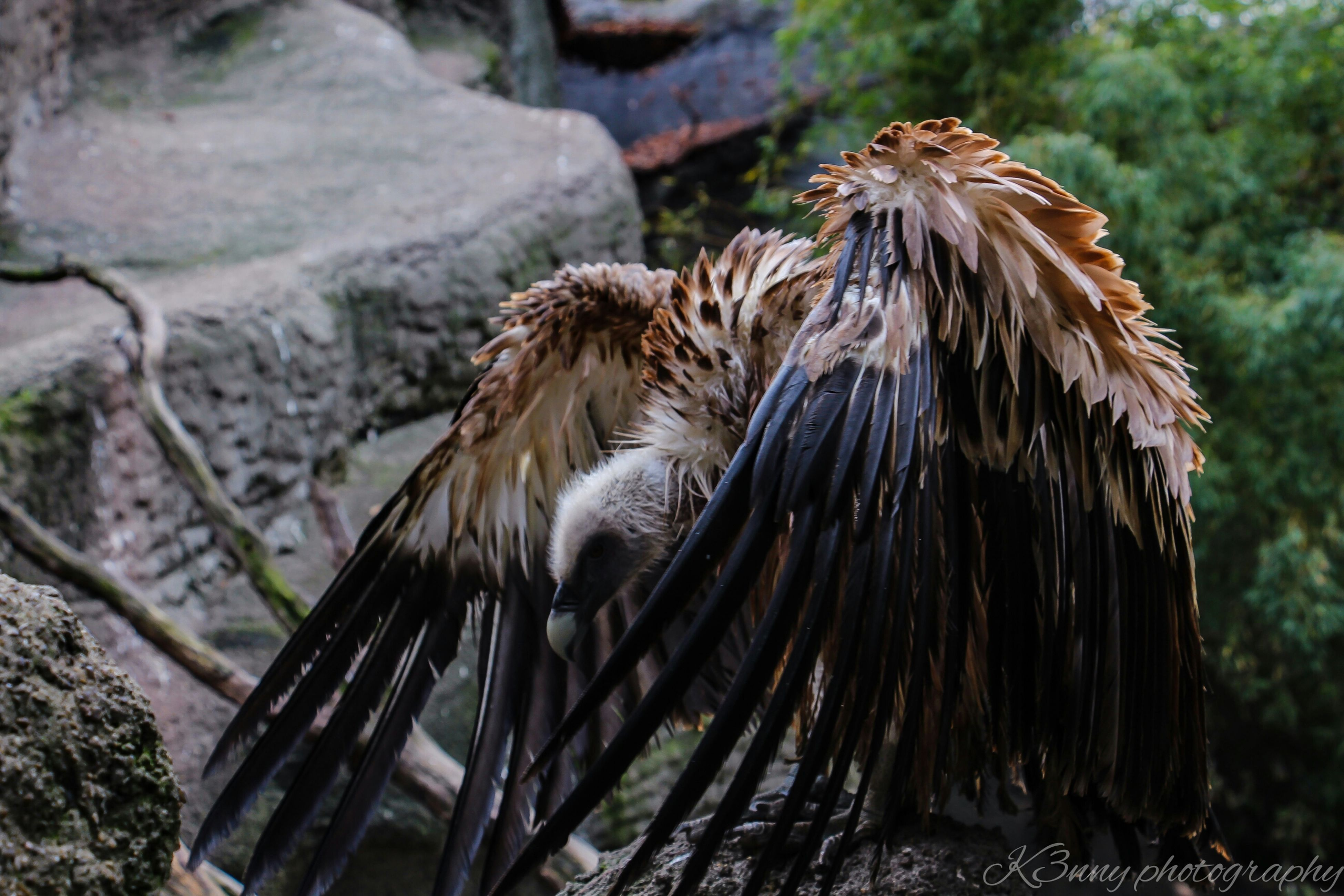 animal themes, animals in the wild, wildlife, one animal, bird, focus on foreground, perching, close-up, nature, bird of prey, outdoors, full length, zoology, no people, day, side view, zoo, tree, beauty in nature, vertebrate
