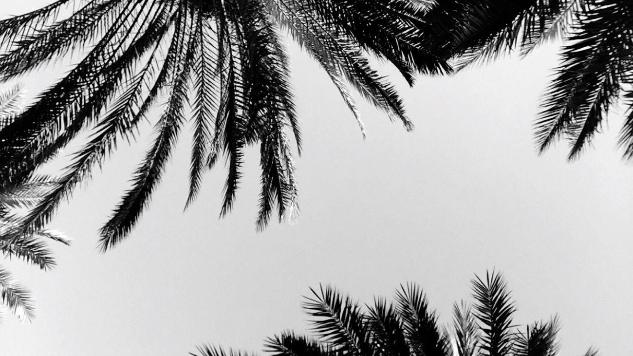 Jeddah ❤️ النخيل
