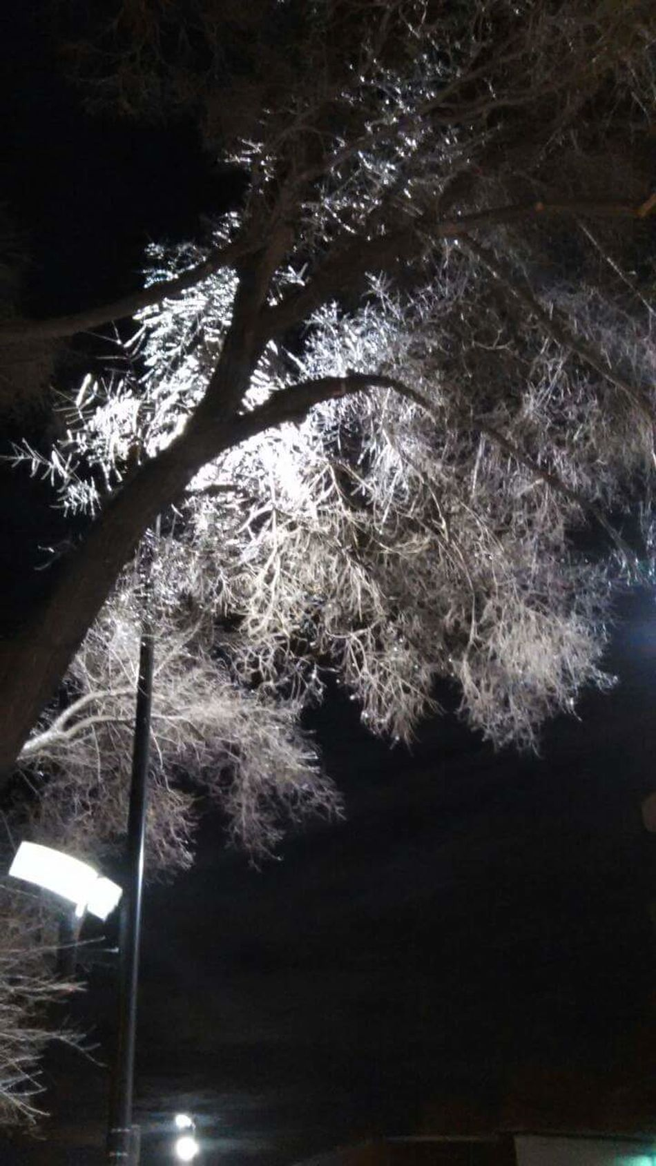 Frozen ice branches Tree Growth Beauty In Nature Frozen Nature Ice Branch Winter