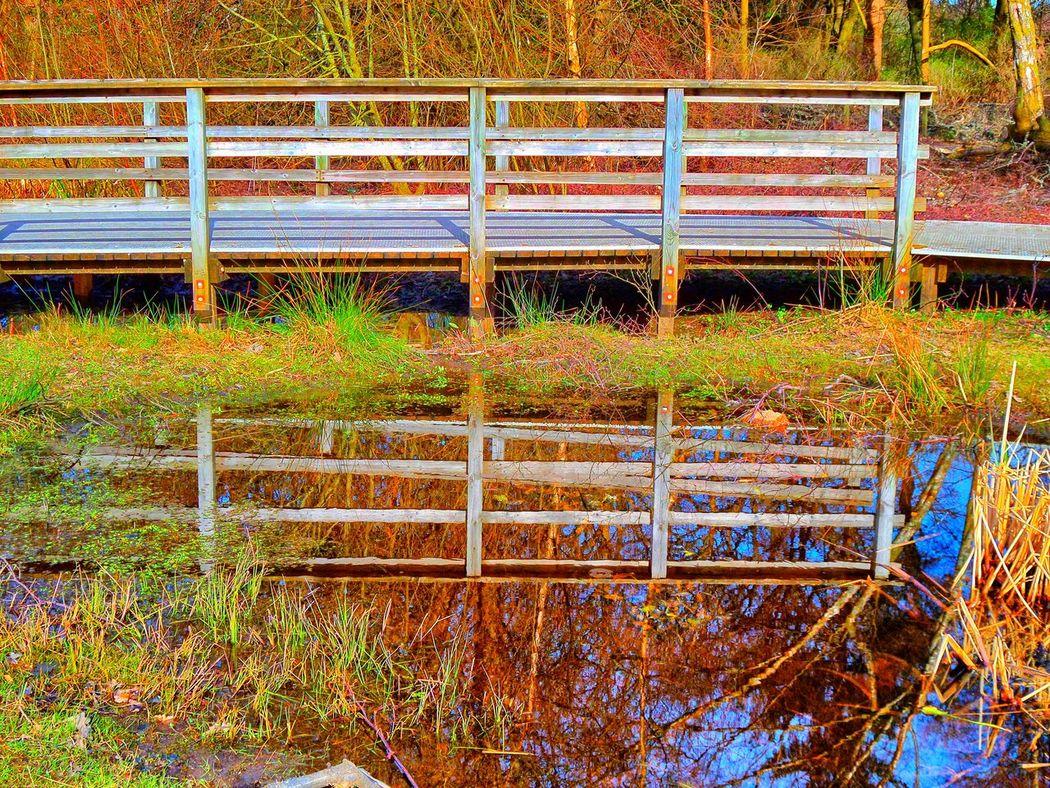Balloch Park Bridge Bridge Reflected In Water Bridge Reflection Bridge Reflections Day Grass Growth Loch Lomond Nature No People Outdoors Pond Pond Reflections Summer Tranquility Water Water Reflection Water Reflections Water Reflections Taking Photos